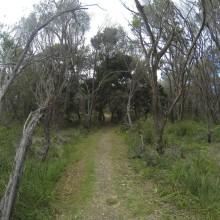 Australia144