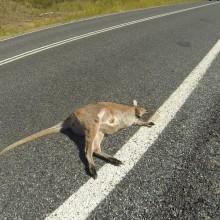Australia167