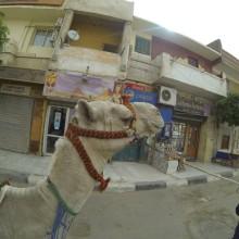Egypt061